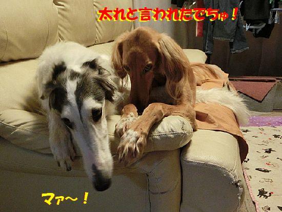 d_20140224012851c7e.jpg