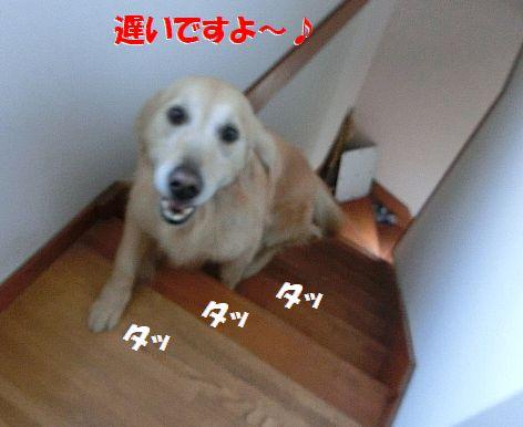 d_20140411233947ff3.jpg