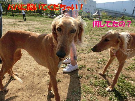 d_20140429102500ec3.jpg