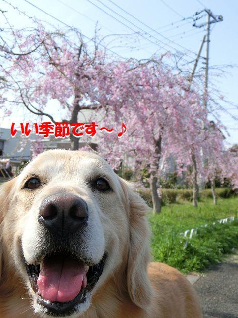 e_20140408231550199.jpg