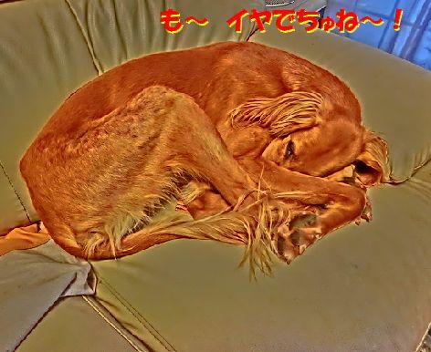 f_2014040621423602d.jpg
