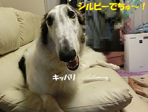 g_20140715203832089.jpg