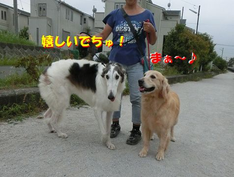 g_20140810124003dd0.jpg