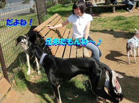 h_2014042910263213d.jpg