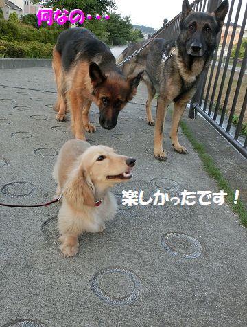 i_201407041947174e7.jpg