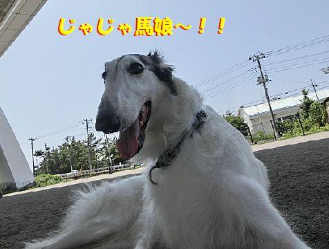 j_20140802105026019.jpg