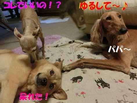 l_201407152038296e5.jpg