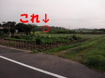 NCM_0519s.jpg