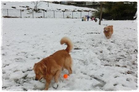 やどりき雪2