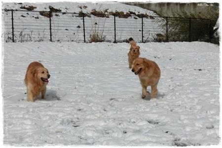 やどりき雪9