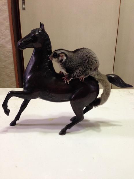 りん乗馬2