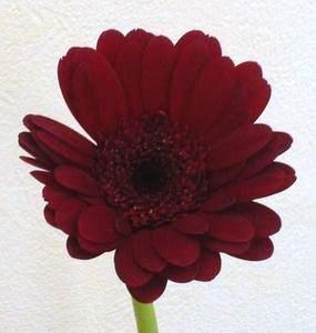 綺麗はお花