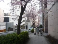 0325nakakusakura18.jpg