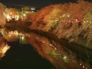 0410yozakuraoooka1.jpg