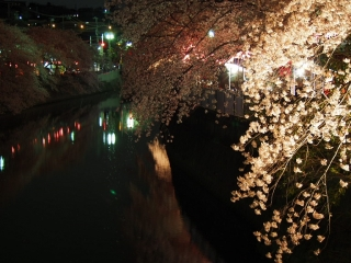 0410yozakuraoooka4.jpg
