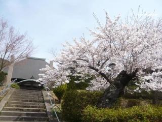 0423yamagataho17_2014042408595207c.jpg