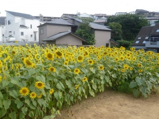 0803himawaka5.jpg