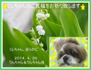 0502suzuranミレちゃん-1-2-3hosi