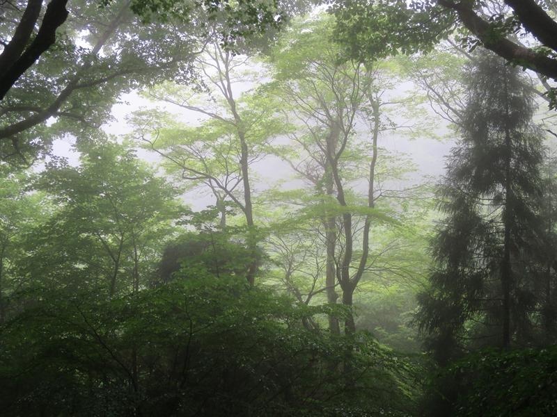 霧の中1140612
