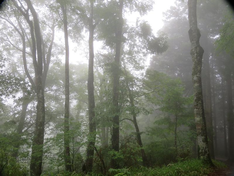 霧の中2140612