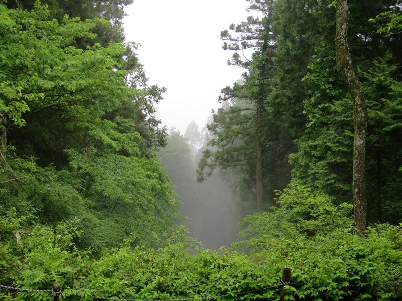 霧の中3140612