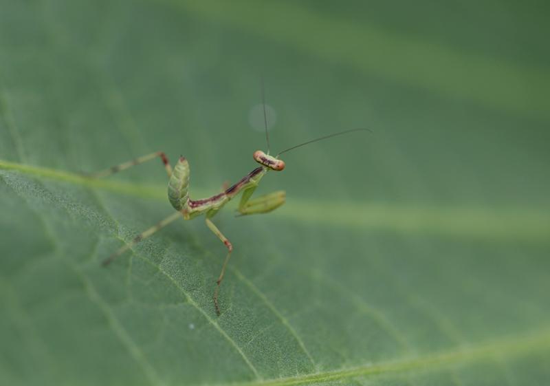 昆虫2140623