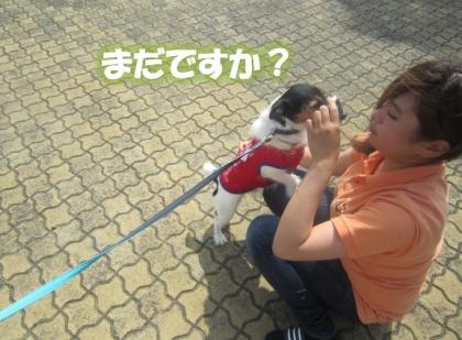 20140727009.jpg