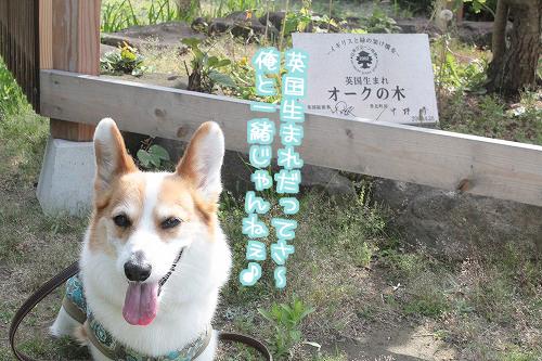 アナタは日本生まれです