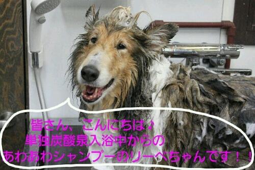 2014-3-21犬濯屋
