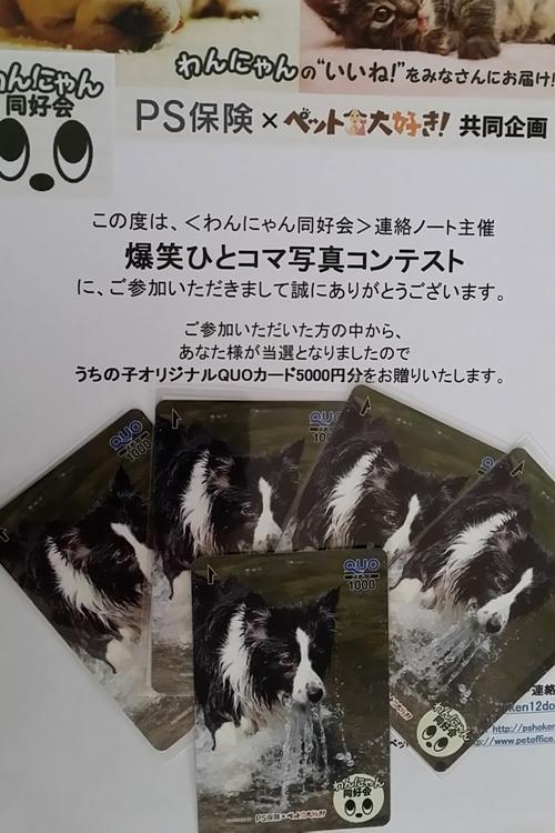 らんちゃんQUOカード