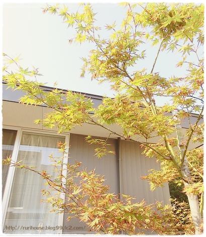 20140530-2.jpg