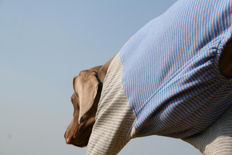 薄長袖シャツ4