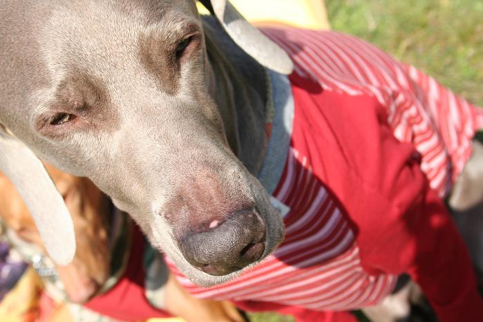 薄長袖シャツ赤5