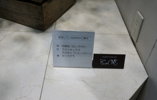 桜生花002