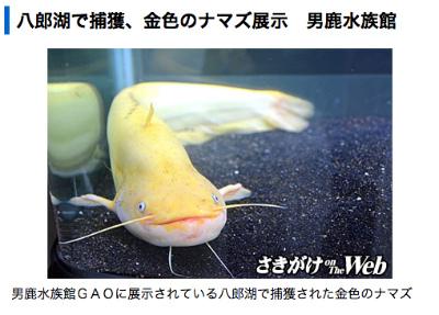2014_sakigake_namazu.jpg