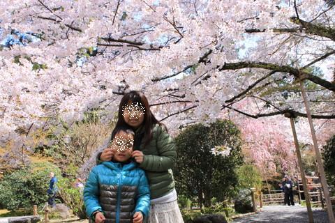 2014春京都 479