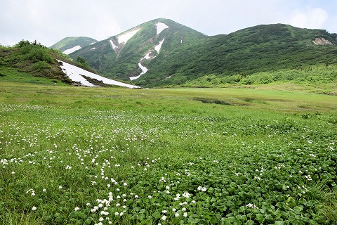 火打山とワタスゲ