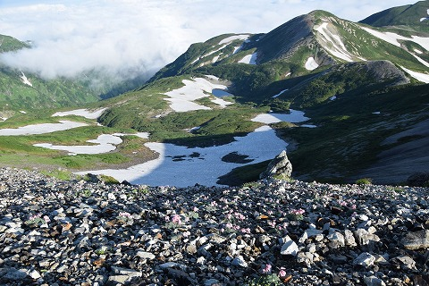 鉢ヶ岳とコマクサ