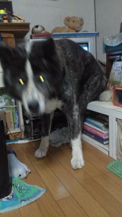 カミナリ犬