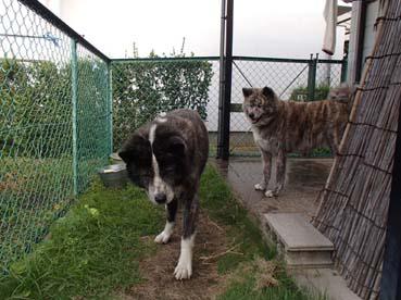 タライ犬8