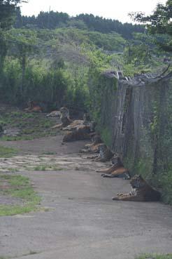 魅惑の虎ゾーン1