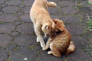 子猫の愛ちゃん