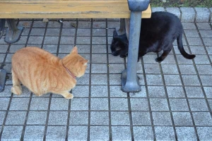 Ai-chan The Cat and Black Cat