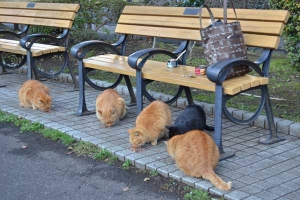 Ai-chan The Cat (far right) Having Breakfast