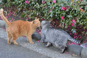 Cats About To Kiss