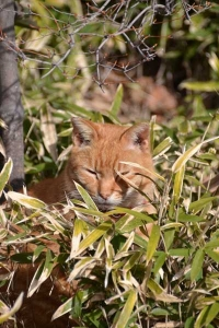 Ai-chan The Cat In The Bush
