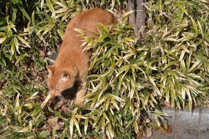 Ai-chan The Cat Coming Out of Bush