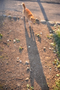 Cat and Its Long Shadow