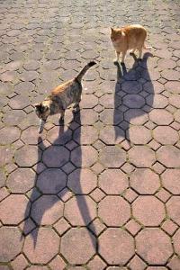 Cat Duo Shadows