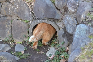Chubby Cat Going Into The Tube